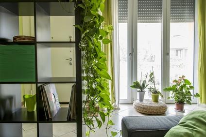 welche pflanzen sind besonders gut f r das raumklima. Black Bedroom Furniture Sets. Home Design Ideas