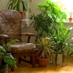 Wie Pflanzen und Luftbefeuchtungsgeräte in der Winterzeit bei brennenden Augen helfen können
